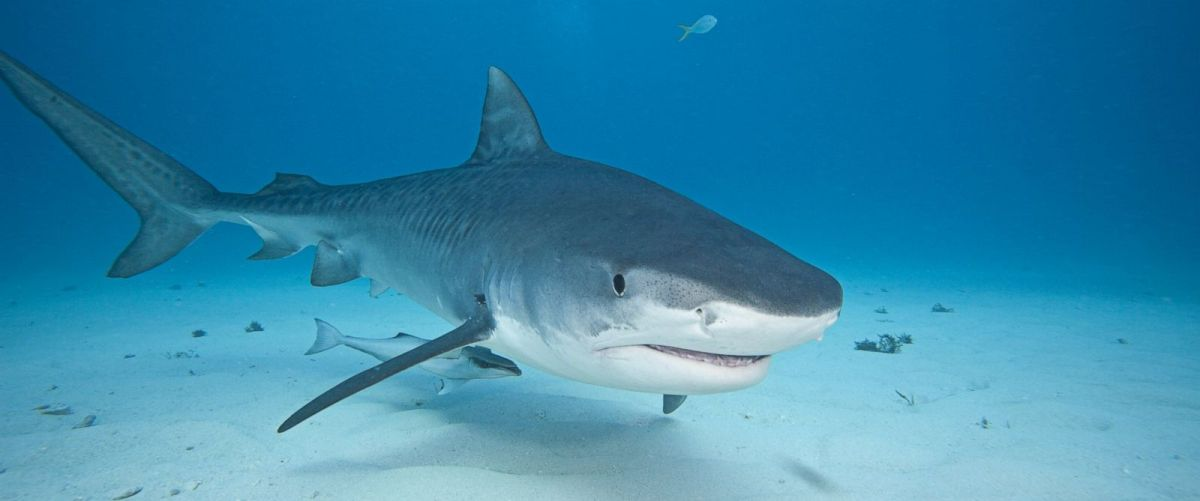 Sharks That You Should Bully (Because They're Different)